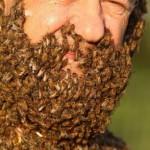 Η μεγαλύτερη γενειάδα από....μέλισσες!