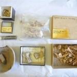 Φαγητό 4.500 ετών βρέθηκε σε ντουλάπι στην Αγγλία