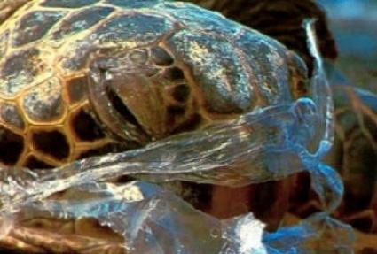 Πλαστική σακούλα: ένα θανατηφόρο γεύμα