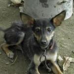 Καταδίκη ηθικού αυτουργού για βασανισμό ζώου