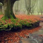 To «μυστηριώδες» δάσος στη βόρεια Ισπανία!