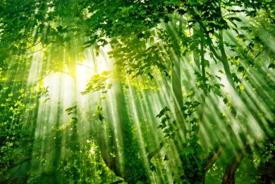 Αμαζόνιος: Αυξήθηκε η αποψίλωση των δασών