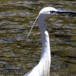 Καταγραφή όλων των εκτάσεων Natura