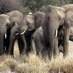 Το «μνήμη ελέφαντα» τελικά φαίνεται πως ισχύει