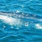 Ο αφανισμός των μεγάλων θηλαστικών στερεί τη ζωή από τους ωκεανούς
