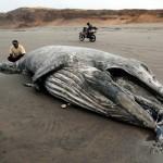 Άδοξο τέλος για έναν γίγαντα των θαλασσών