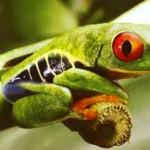 8,7 εκατομμύρια είδη κατοικούν τον πλανήτη Γη