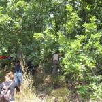 Εντολή κοπής του δάσους Σκουριών από το υπουργείο Περιβάλλοντος