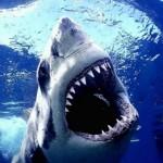 Σέρφερ ξέφυγε από καρχαρία ρίχνοντας του μπουνιές