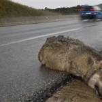 Σκοτώνονται άγρια ζώα, κινδυνεύουν οι οδηγοί