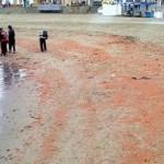 Χιλιάδες οστρακοειδή νεκρά στο Περού