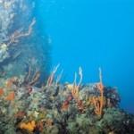 Βρήκαν σημαντικά κοιτάσματα στο βυθό του Ειρηνικού