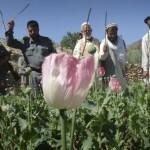 Αύξηση στην παραγωγή οπίου στο Αφγανιστάν