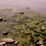 Βαριά πρόστιμα για όσους ρυπαίνουν το περιβάλλον