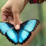 Πάνω από 70 είδη πεταλούδων έχουν καταγραφεί στο Πήλιο