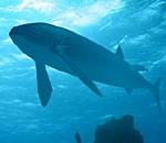 Το μεγαλύτερο ψάρι στον κόσμο,Leedsichthys