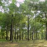 Η ενεργειακή φτώχεια σκοτώνει τα δάση των Βαλκανίων